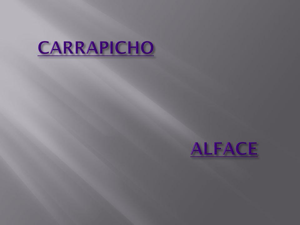 CARRAPICHO ALFACE