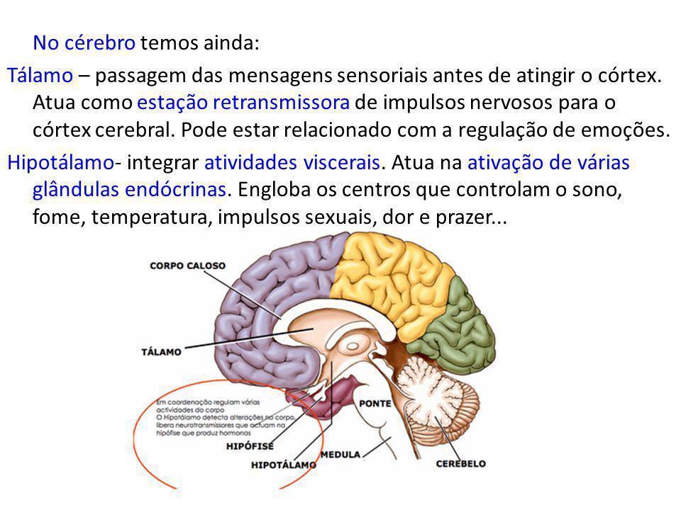 No cérebro temos ainda: