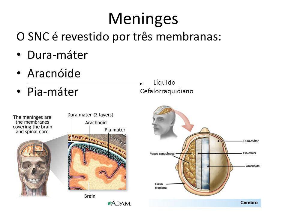 Meninges O SNC é revestido por três membranas: Dura-máter Aracnóide
