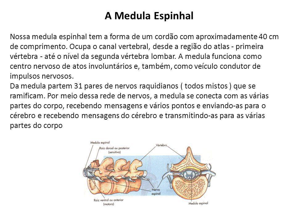 A Medula Espinhal