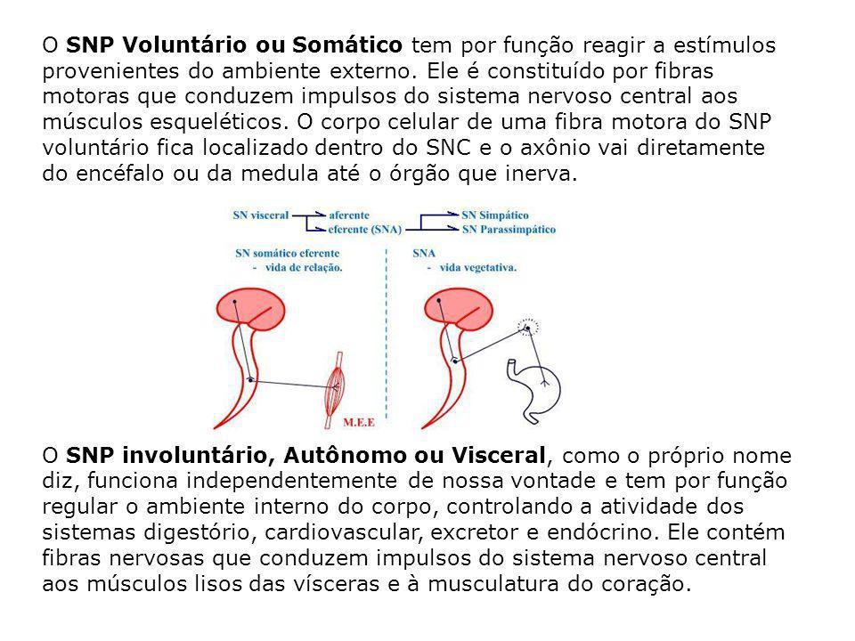O SNP Voluntário ou Somático tem por função reagir a estímulos provenientes do ambiente externo. Ele é constituído por fibras motoras que conduzem impulsos do sistema nervoso central aos músculos esqueléticos. O corpo celular de uma fibra motora do SNP voluntário fica localizado dentro do SNC e o axônio vai diretamente do encéfalo ou da medula até o órgão que inerva.