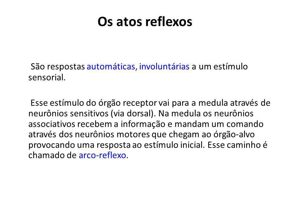 Os atos reflexos São respostas automáticas, involuntárias a um estímulo sensorial.