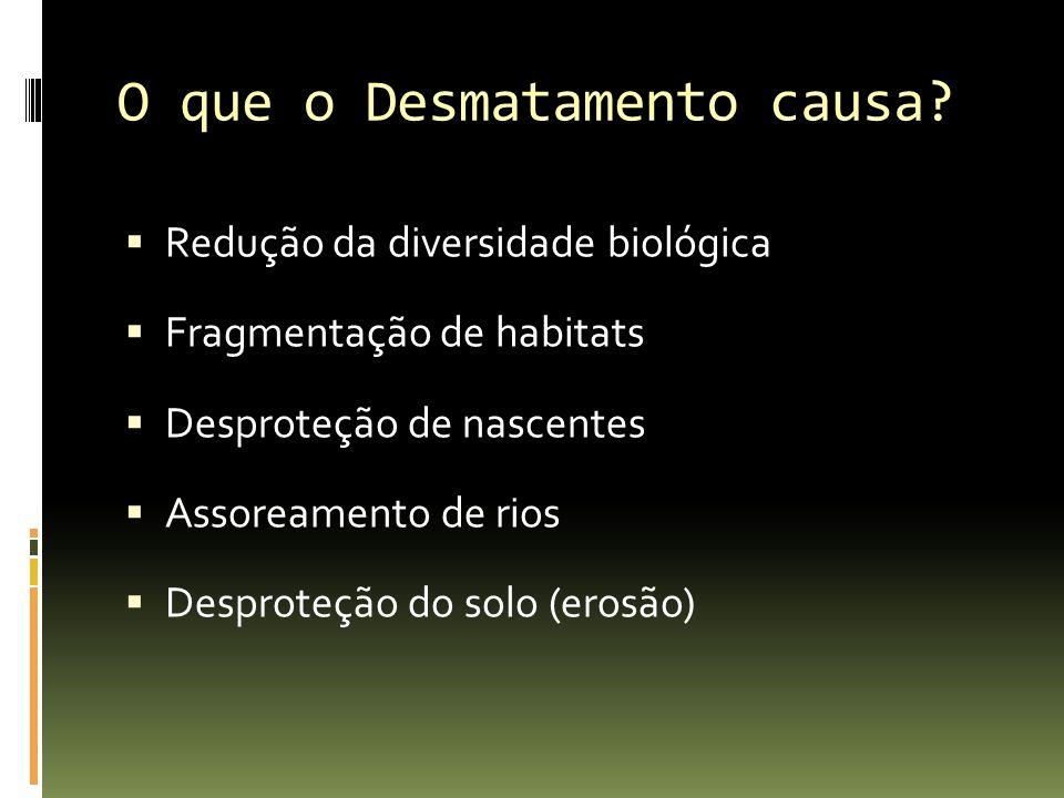 O que o Desmatamento causa