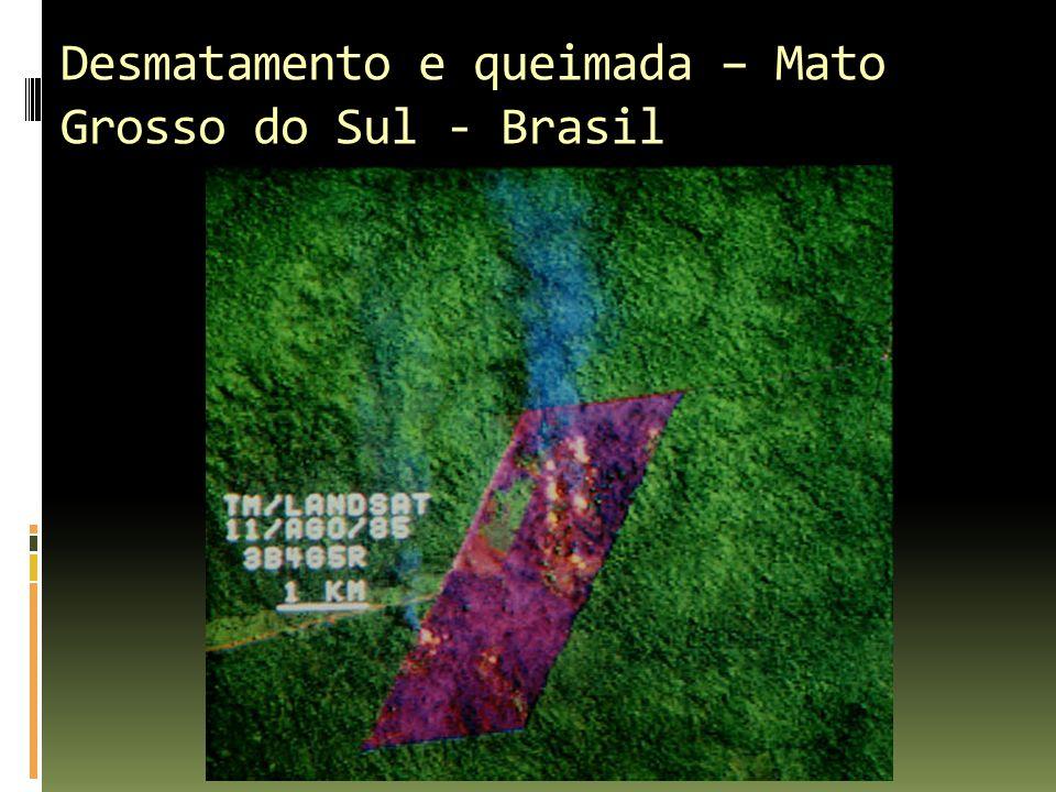 Desmatamento e queimada – Mato Grosso do Sul - Brasil