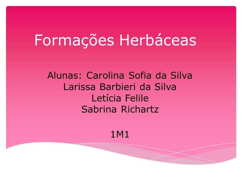 Formações Herbáceas Alunas: Carolina Sofia da Silva Larissa Barbieri da Silva Letícia Felile Sabrina Richartz.