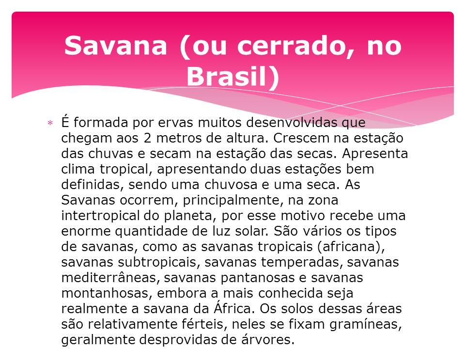 Savana (ou cerrado, no Brasil)