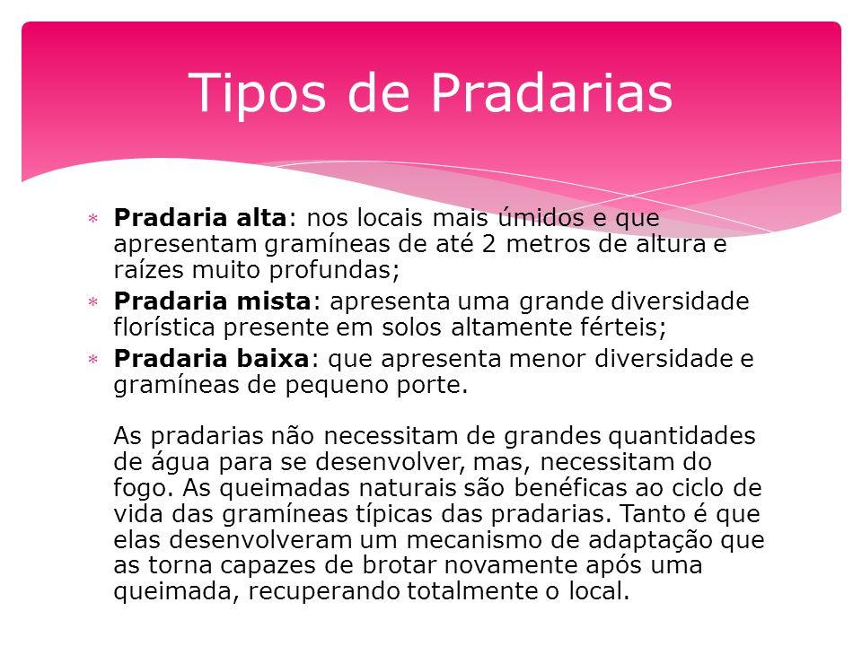 Tipos de Pradarias Pradaria alta: nos locais mais úmidos e que apresentam gramíneas de até 2 metros de altura e raízes muito profundas;