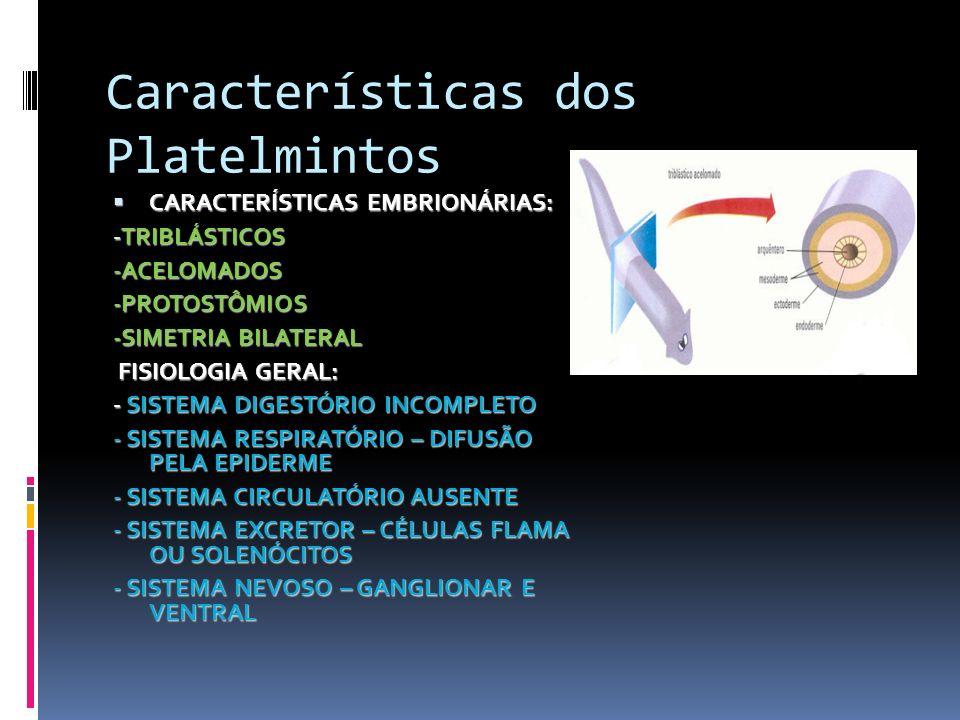 Características dos Platelmintos