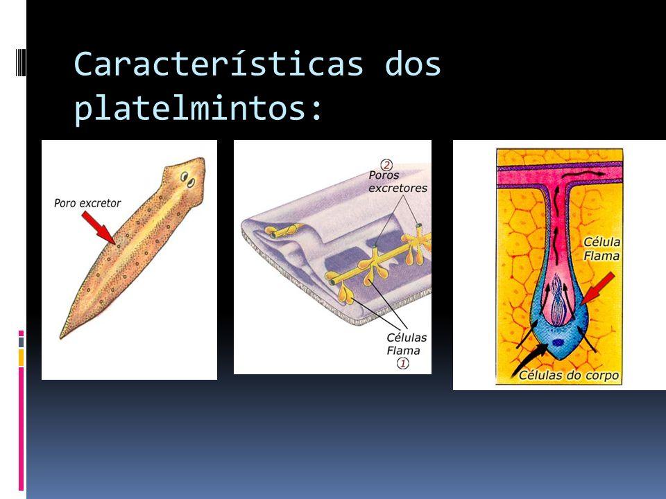 Características dos platelmintos: