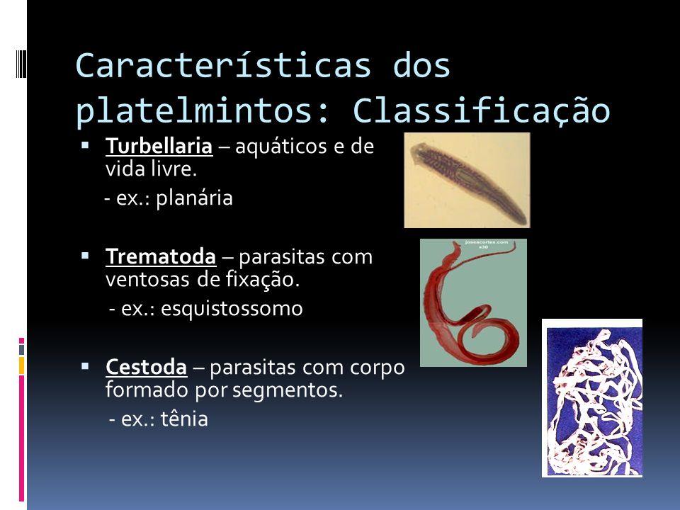 Características dos platelmintos: Classificação