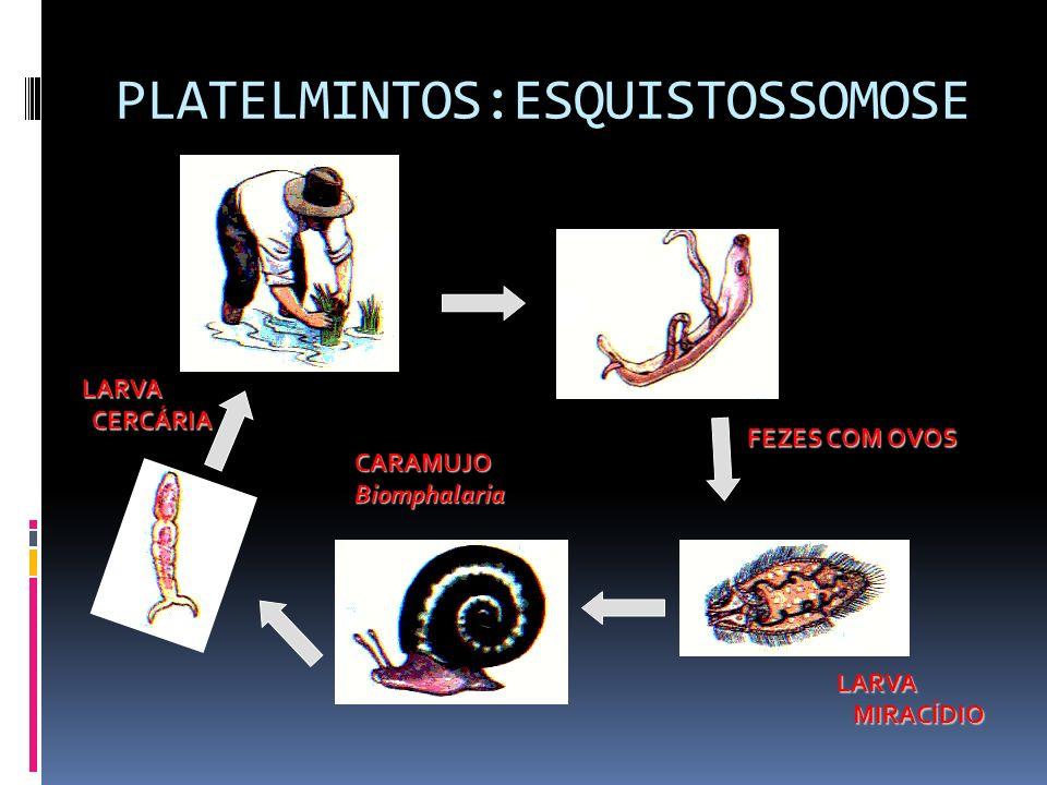 PLATELMINTOS:ESQUISTOSSOMOSE