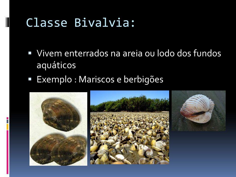 Classe Bivalvia: Vivem enterrados na areia ou lodo dos fundos aquáticos.