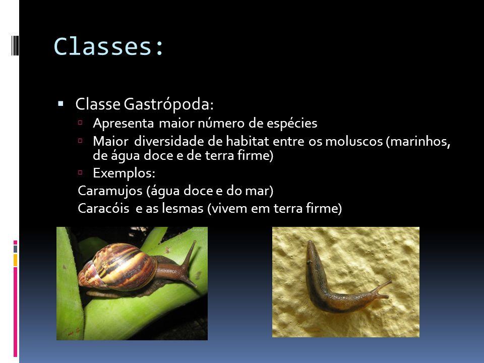 Classes: Classe Gastrópoda: Apresenta maior número de espécies