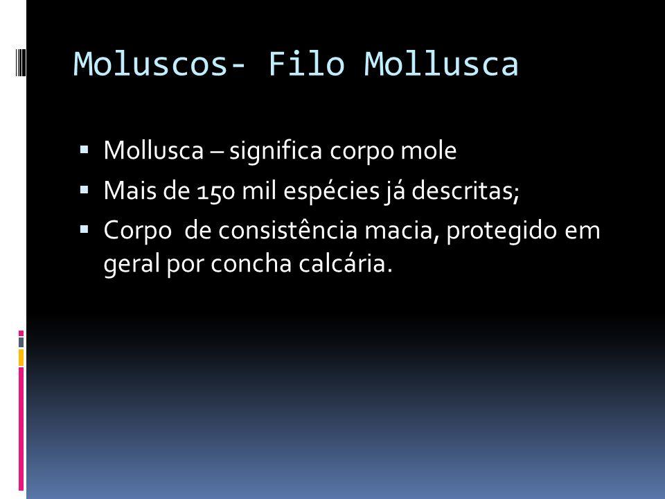 Moluscos- Filo Mollusca