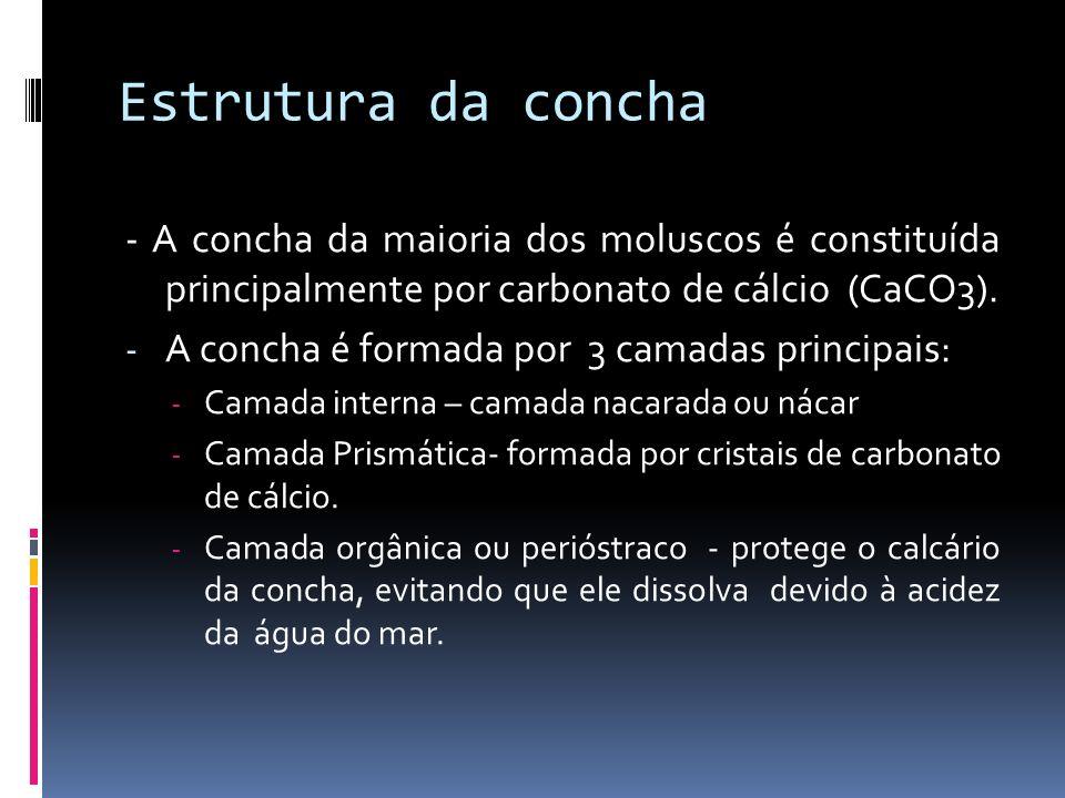 Estrutura da concha - A concha da maioria dos moluscos é constituída principalmente por carbonato de cálcio (CaCO3).