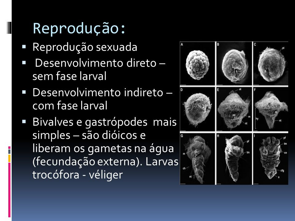 Reprodução: Reprodução sexuada