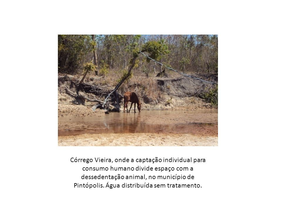 Córrego Vieira, onde a captação individual para consumo humano divide espaço com a dessedentação animal, no município de Pintópolis.