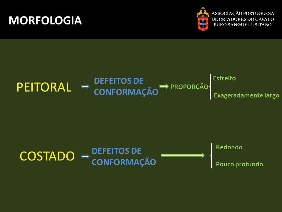 PEITORAL COSTADO MORFOLOGIA DEFEITOS DE CONFORMAÇÃO