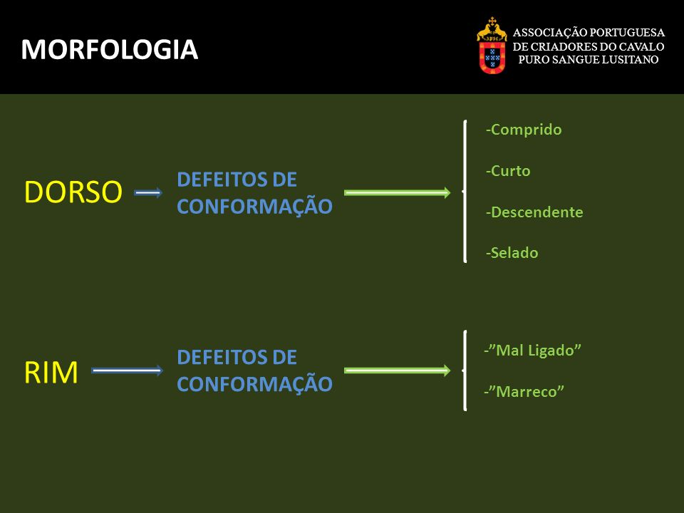 DORSO RIM MORFOLOGIA DEFEITOS DE CONFORMAÇÃO DEFEITOS DE CONFORMAÇÃO