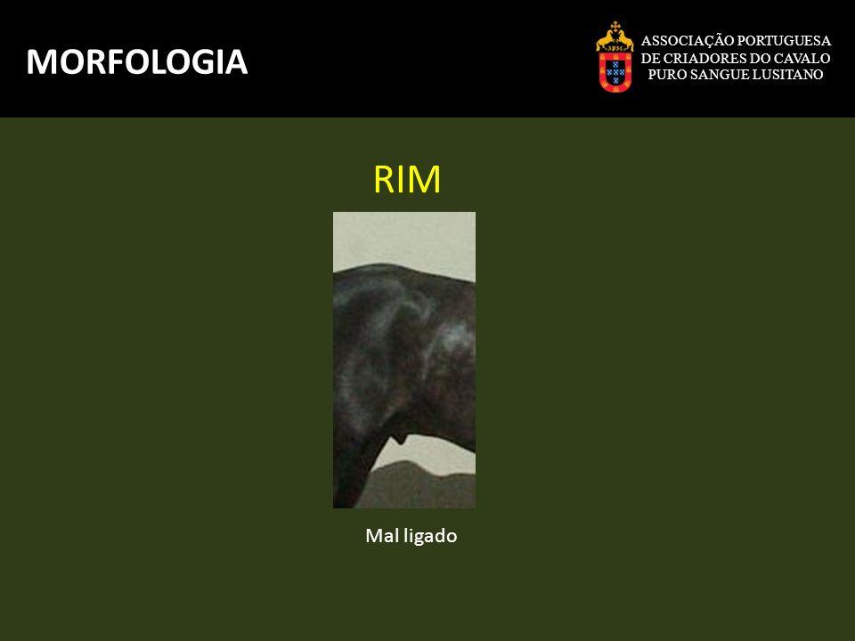 RIM MORFOLOGIA Mal ligado ASSOCIAÇÃO PORTUGUESA DE CRIADORES DO CAVALO