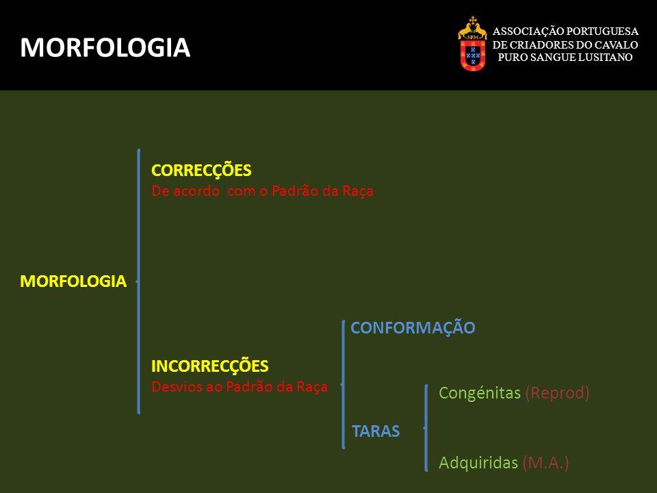 MORFOLOGIA CORRECÇÕES MORFOLOGIA CONFORMAÇÃO INCORRECÇÕES
