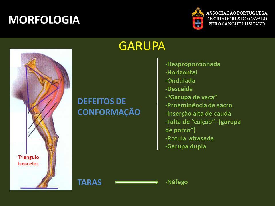 GARUPA MORFOLOGIA DEFEITOS DE CONFORMAÇÃO TARAS -Desproporcionada