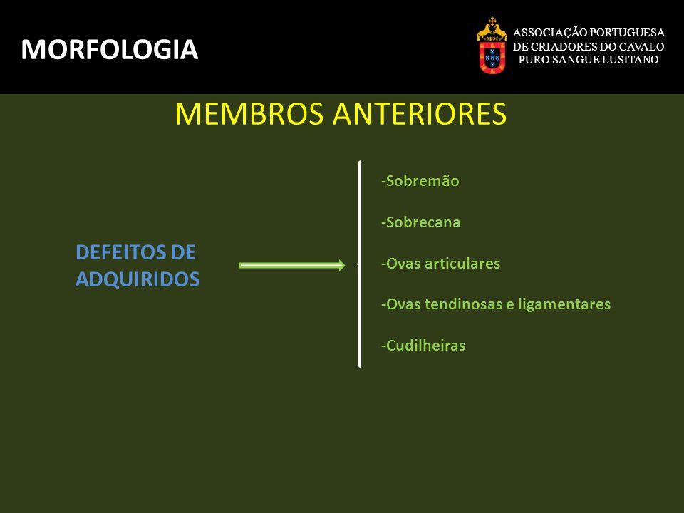 MEMBROS ANTERIORES MORFOLOGIA DEFEITOS DE ADQUIRIDOS -Sobremão