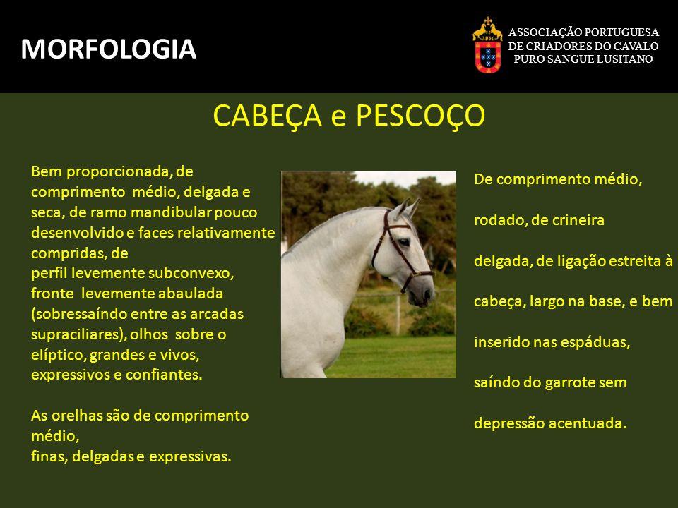 CABEÇA e PESCOÇO MORFOLOGIA