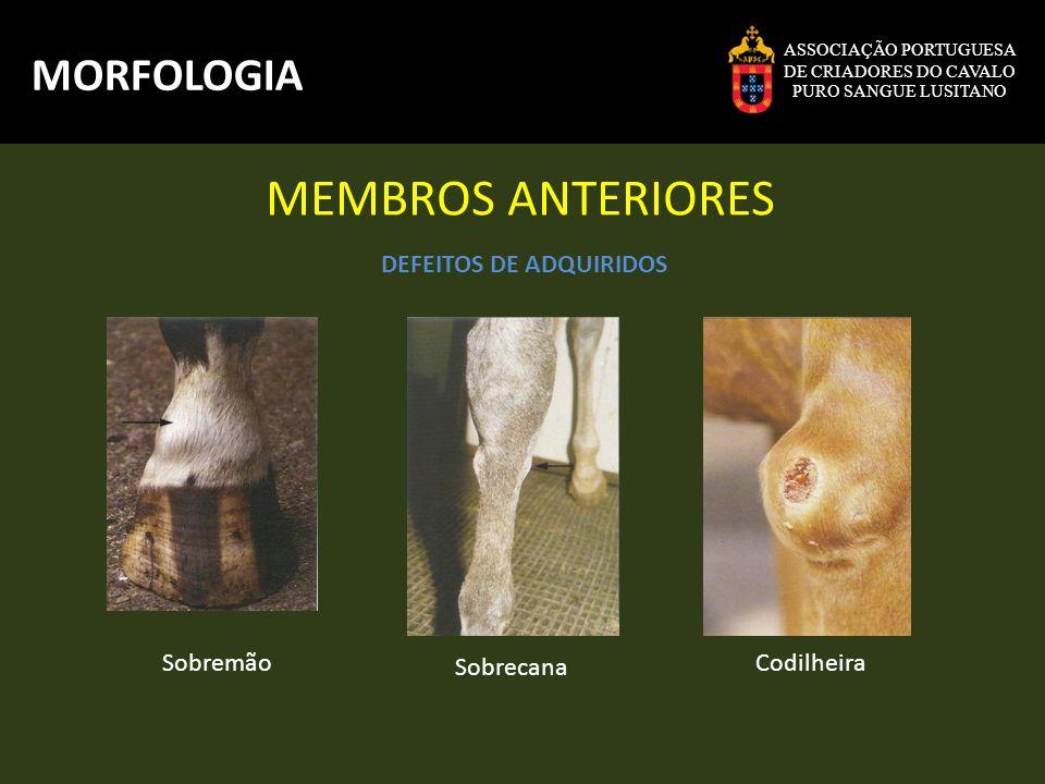 MEMBROS ANTERIORES MORFOLOGIA DEFEITOS DE ADQUIRIDOS Sobremão