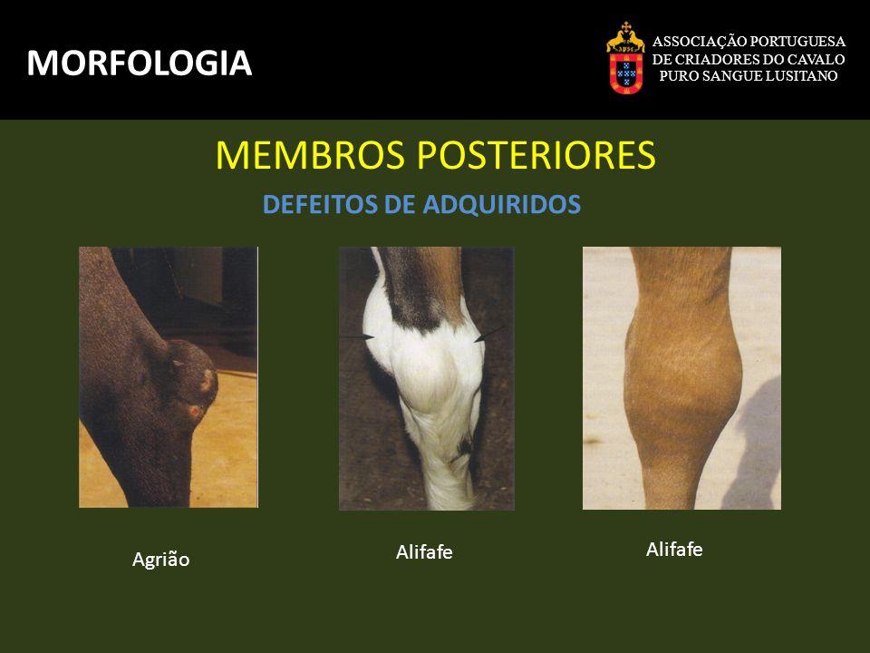 MEMBROS POSTERIORES MORFOLOGIA DEFEITOS DE ADQUIRIDOS Alifafe Alifafe
