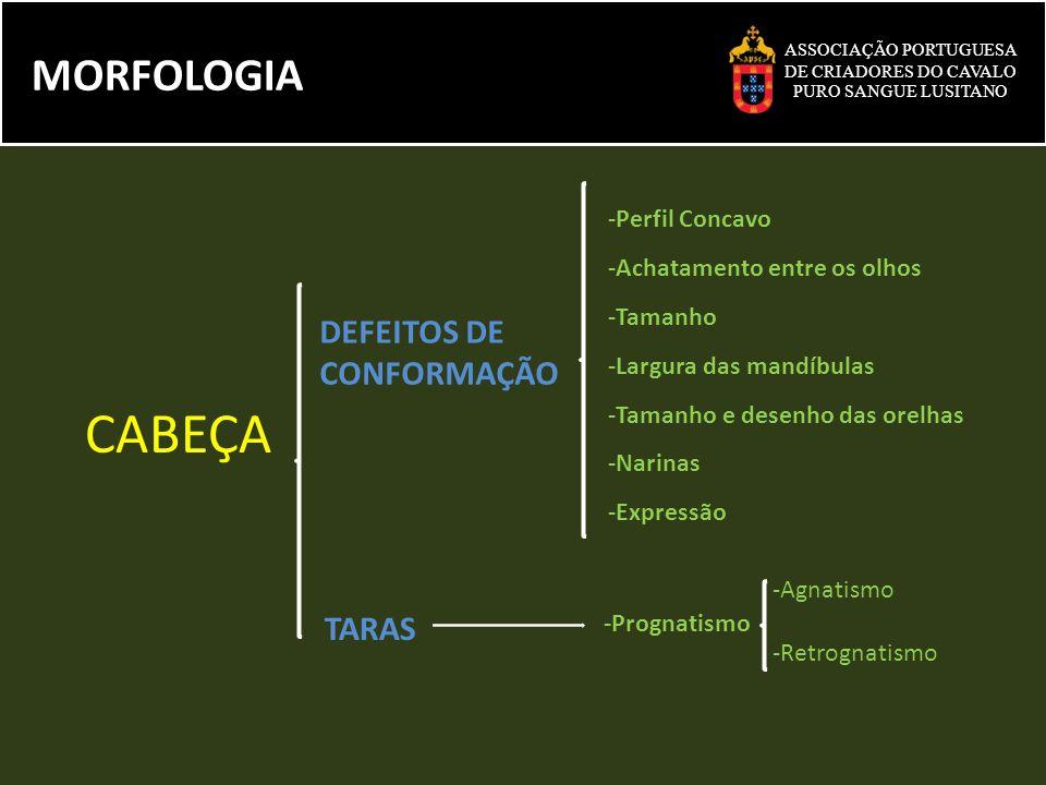 CABEÇA MORFOLOGIA DEFEITOS DE CONFORMAÇÃO TARAS -Perfil Concavo