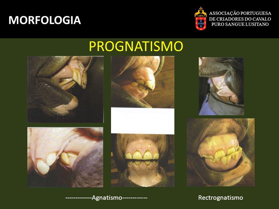 PROGNATISMO MORFOLOGIA -------------Agnatismo------------