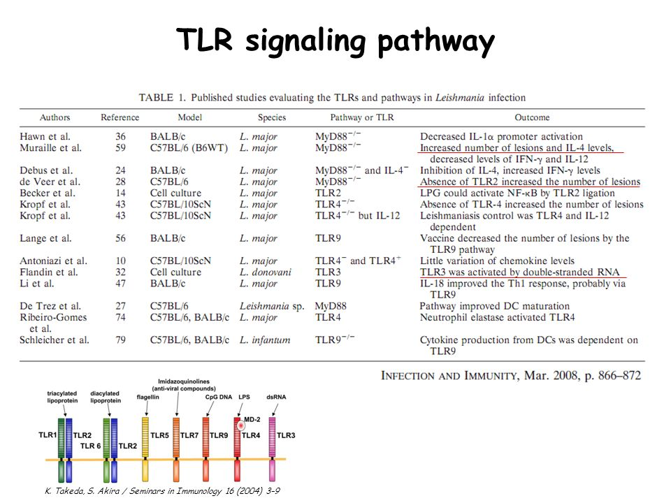 TLR signaling pathway K. Takeda, S. Akira / Seminars in Immunology 16 (2004) 3–9