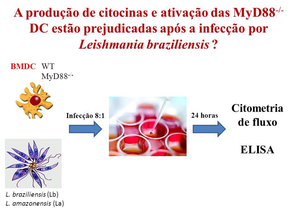 A produção de citocinas e ativação das MyD88-/- DC estão prejudicadas após a infecção por Leishmania braziliensis
