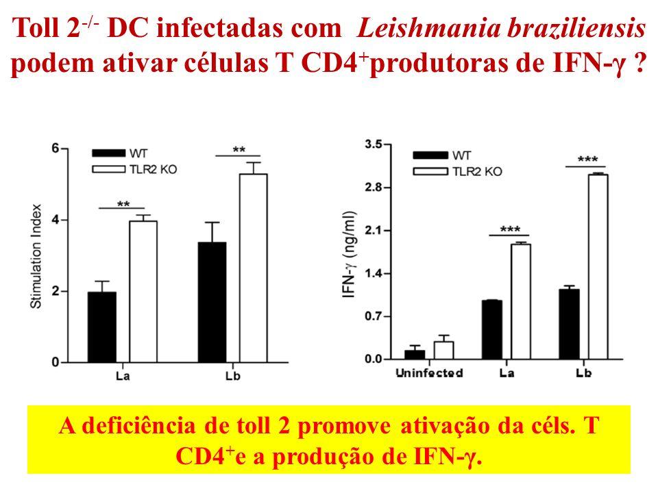 Toll 2-/- DC infectadas com Leishmania braziliensis podem ativar células T CD4+produtoras de IFN-γ