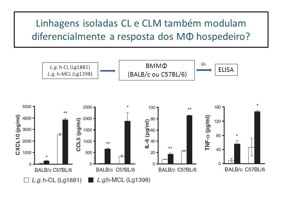 Linhagens isoladas CL e CLM também modulam diferencialmente a resposta dos MΦ hospedeiro