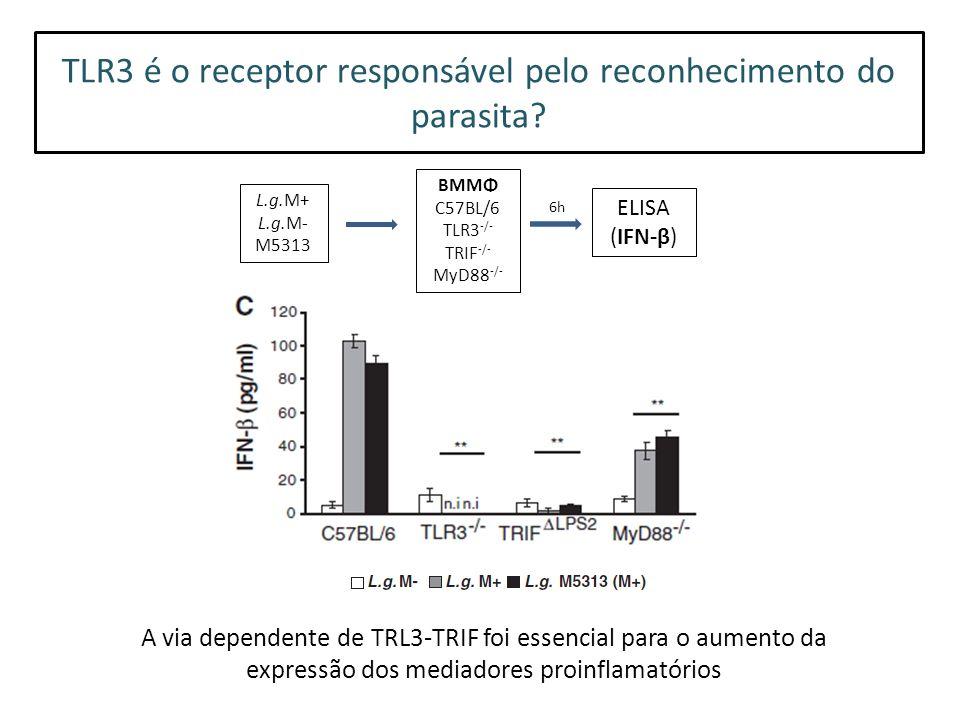 TLR3 é o receptor responsável pelo reconhecimento do parasita