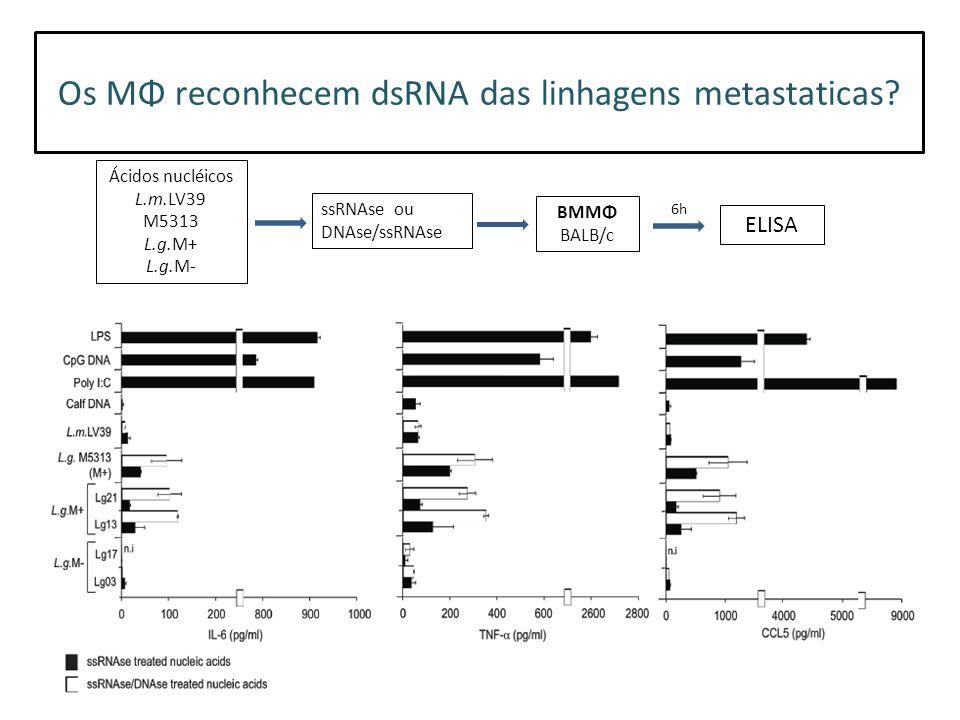 Os MΦ reconhecem dsRNA das linhagens metastaticas