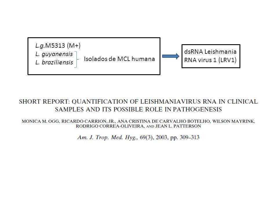 L.g.M5313 (M+) L. guyanensis. L. braziliensis.