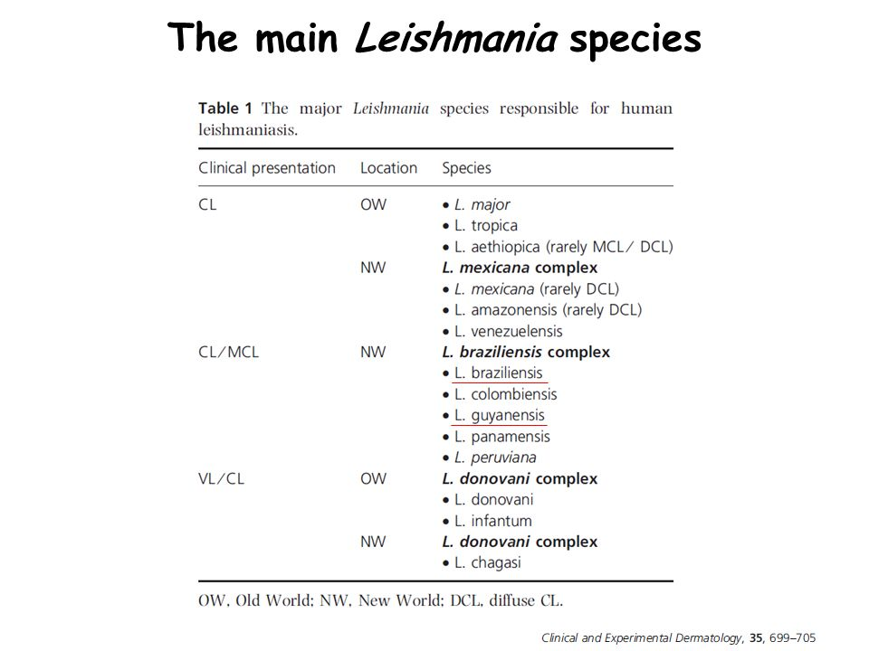 The main Leishmania species