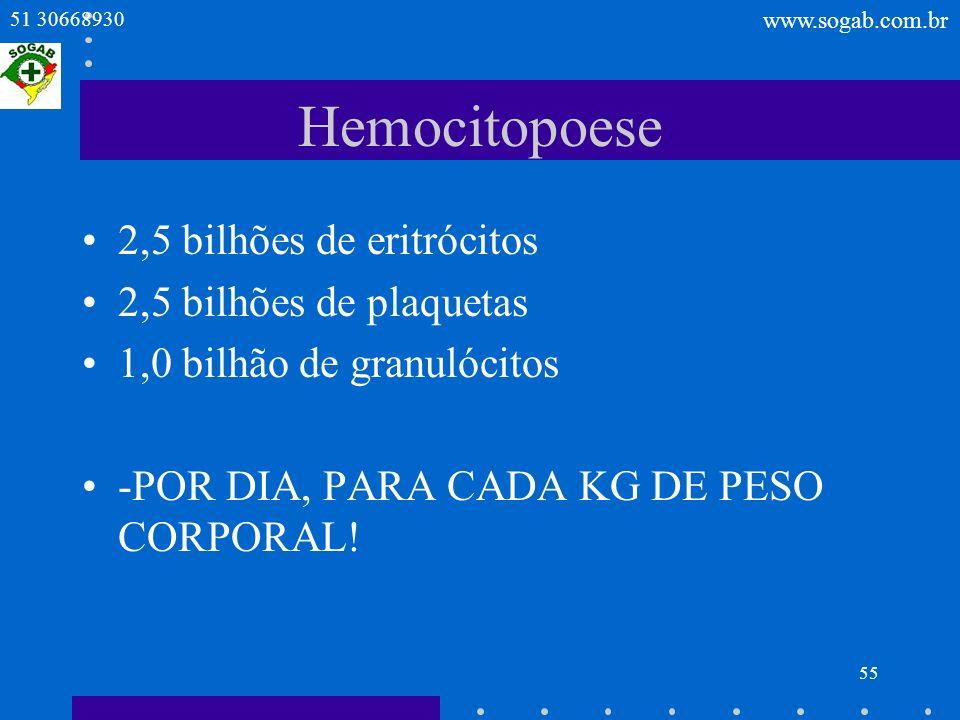 Hemocitopoese 2,5 bilhões de eritrócitos 2,5 bilhões de plaquetas