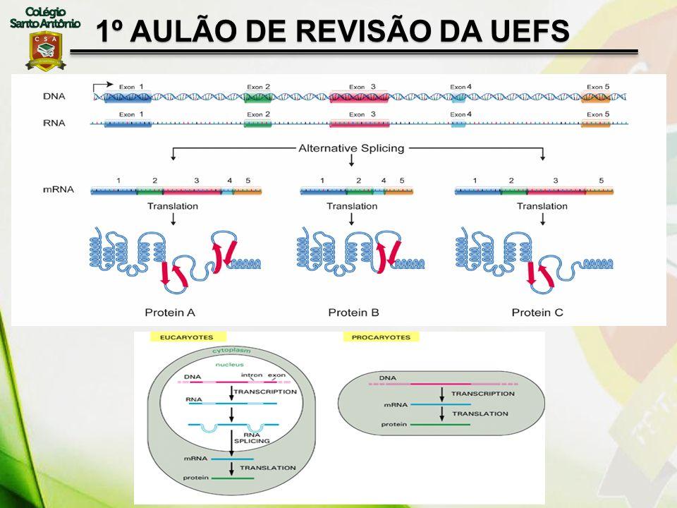 1º AULÃO DE REVISÃO DA UEFS