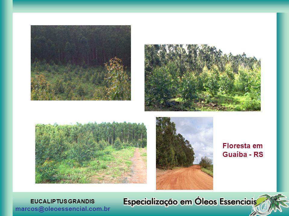 Floresta em Guaíba - RS