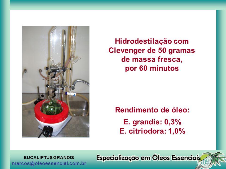 Hidrodestilação com Clevenger de 50 gramas de massa fresca,