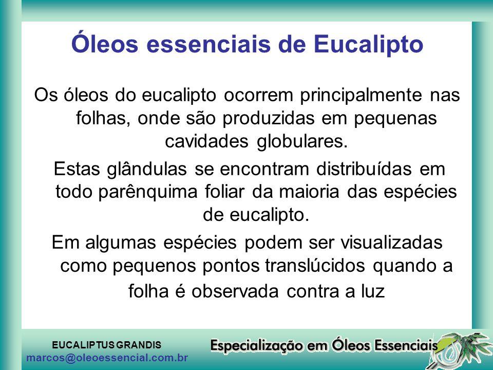 Óleos essenciais de Eucalipto