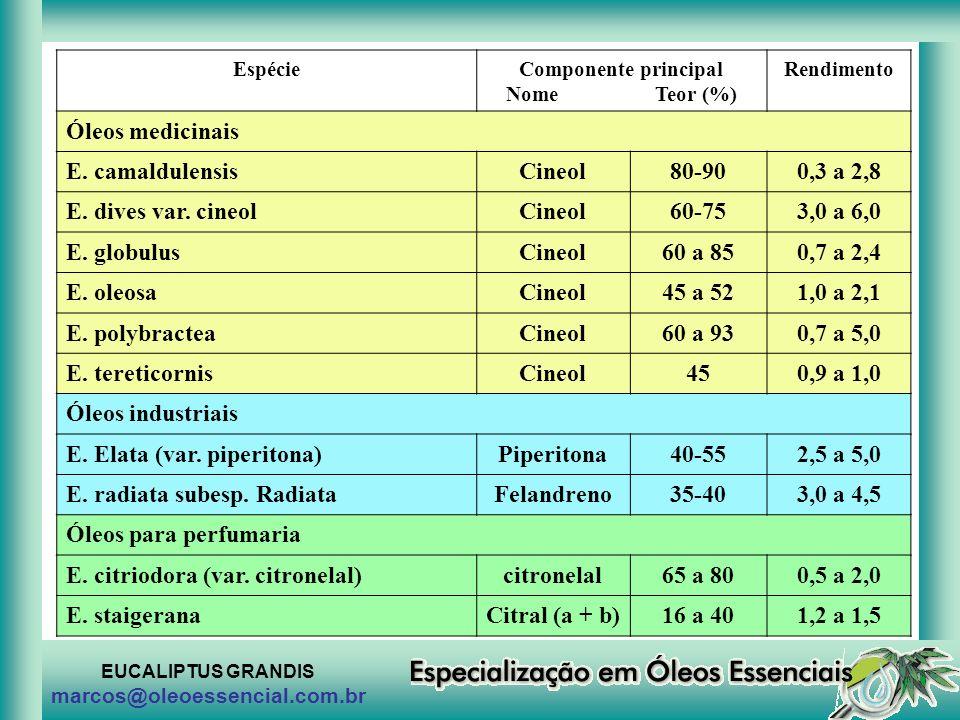 E. Elata (var. piperitona) Piperitona 40-55 2,5 a 5,0