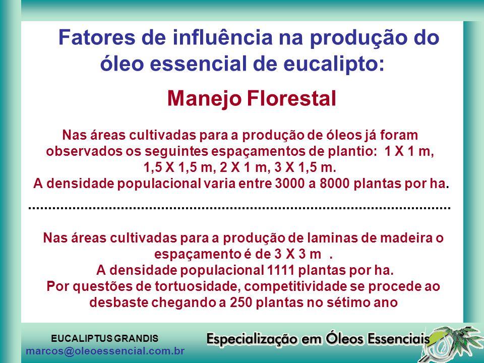 Fatores de influência na produção do óleo essencial de eucalipto:
