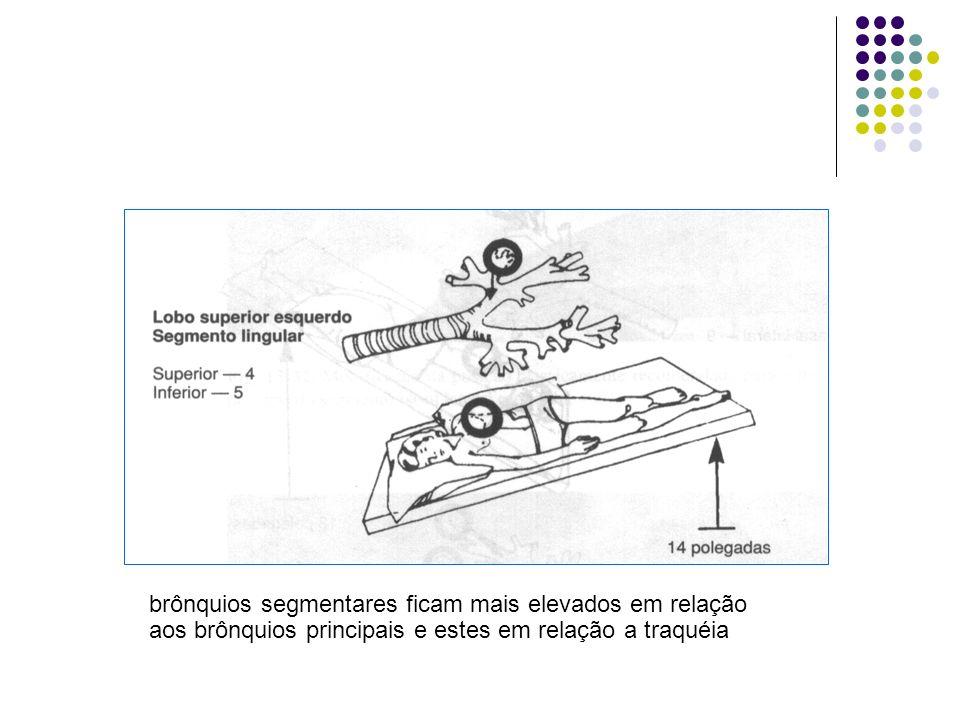 brônquios segmentares ficam mais elevados em relação aos brônquios principais e estes em relação a traquéia
