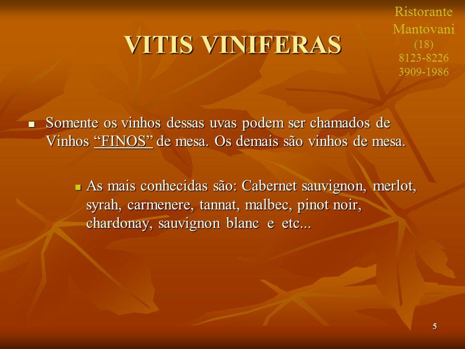 Ristorante Mantovani. (18) 8123-8226. 3909-1986. VITIS VINIFERAS.