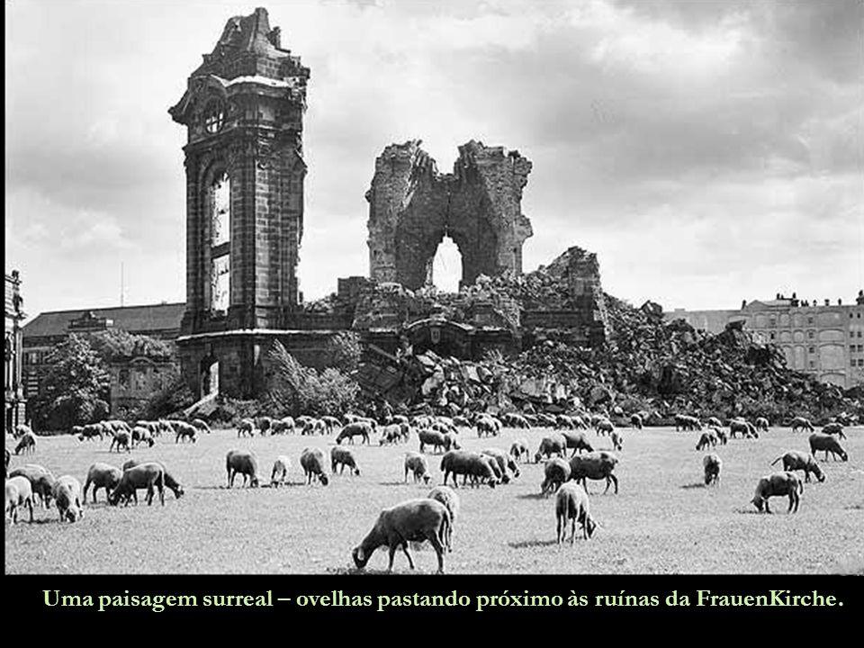 Uma paisagem surreal – ovelhas pastando próximo às ruínas da FrauenKirche.